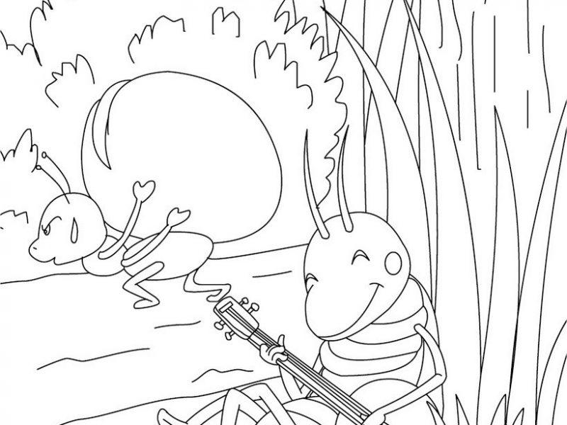 - Comment dessiner une fourmi ...
